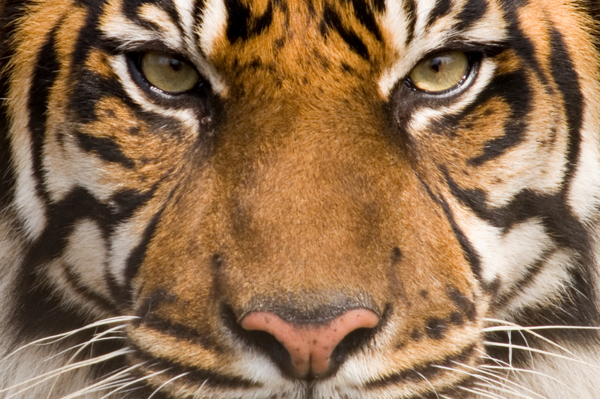 Are you scared to show the real you - Show me a picture of the tiger ...